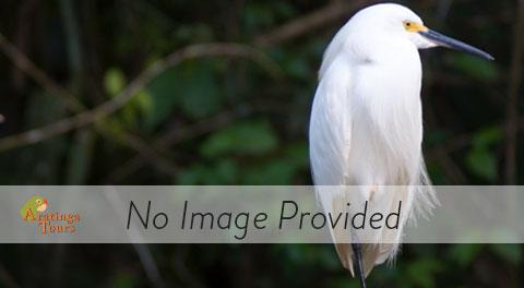 Non-passerine Birds Costa Rica
