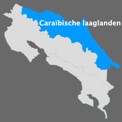 Caraïbische laaglanden