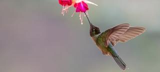 """""""Easy birding"""" vogelreis Costa Rica 2018 met Birding Breaks"""