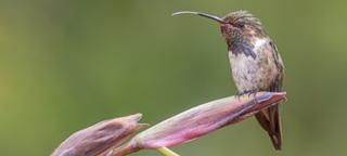 Vogelfotografiereis Costa Rica 2018 met Birding Breaks