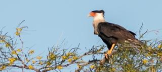 Vogelreis Costa Rica november 2017 met SNP