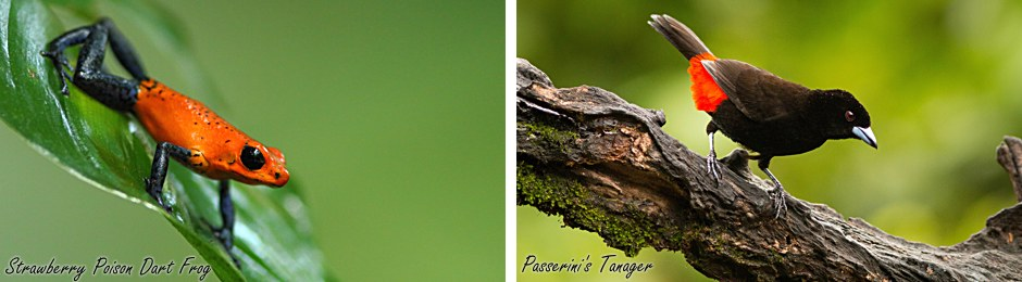 frog + tanager