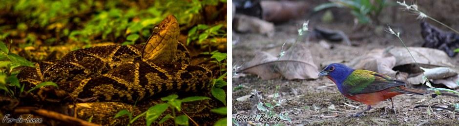snake + bunting
