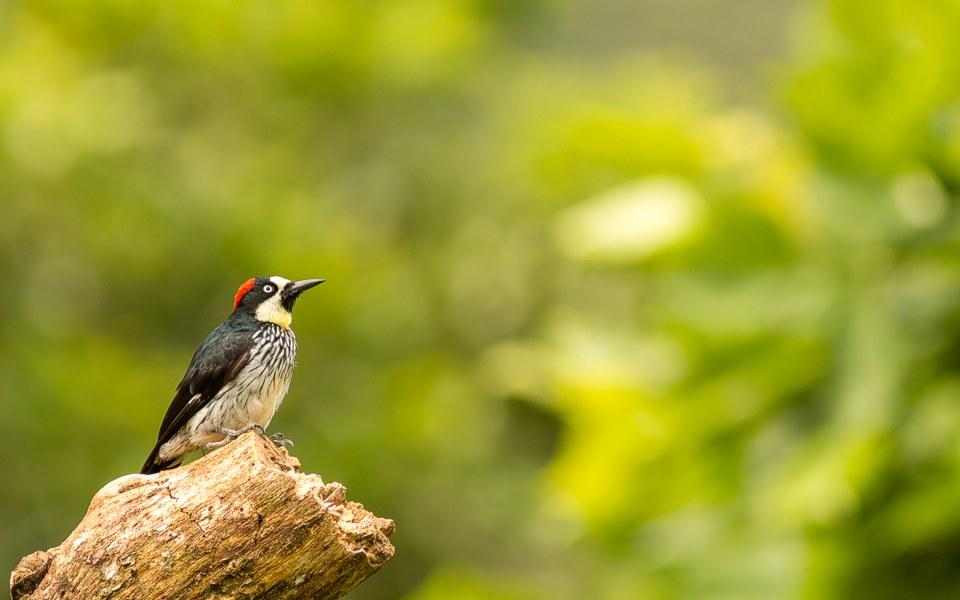 Groepsreizen voor vogelliefhebbers en natuurfotografen