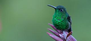 Vogelreis Costa Rica januari 2018 met Birding Breaks