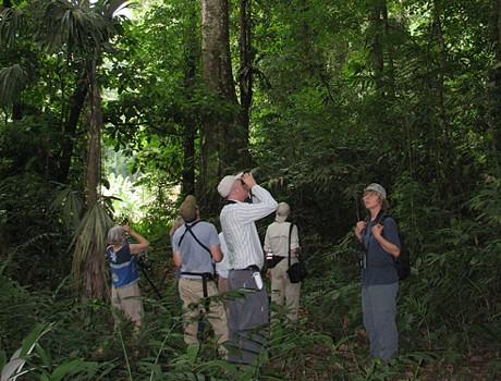 Vogelobservatie in Costa Rica