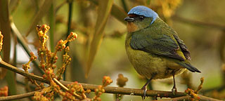 vogelreis Costa Rica: 4 ecozones