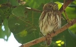 Vogelreizen Costa Rica