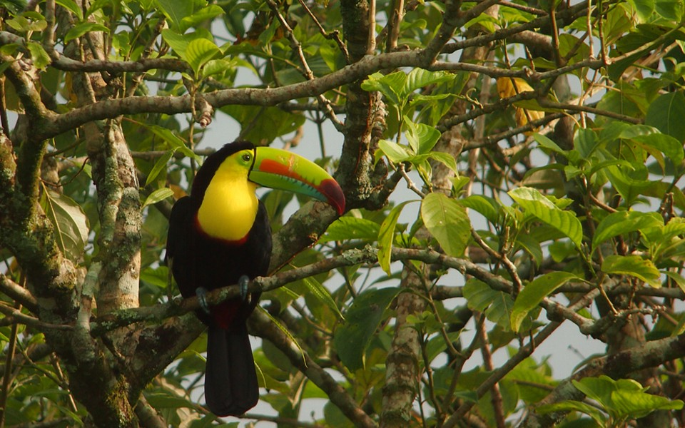 Let's go birdwatching in Costa Rica…