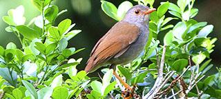 Budget vogelreis Costa Rica