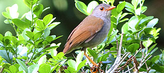 Birding Costa Rica on a Budget
