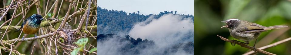 Birding Costa Rica's south