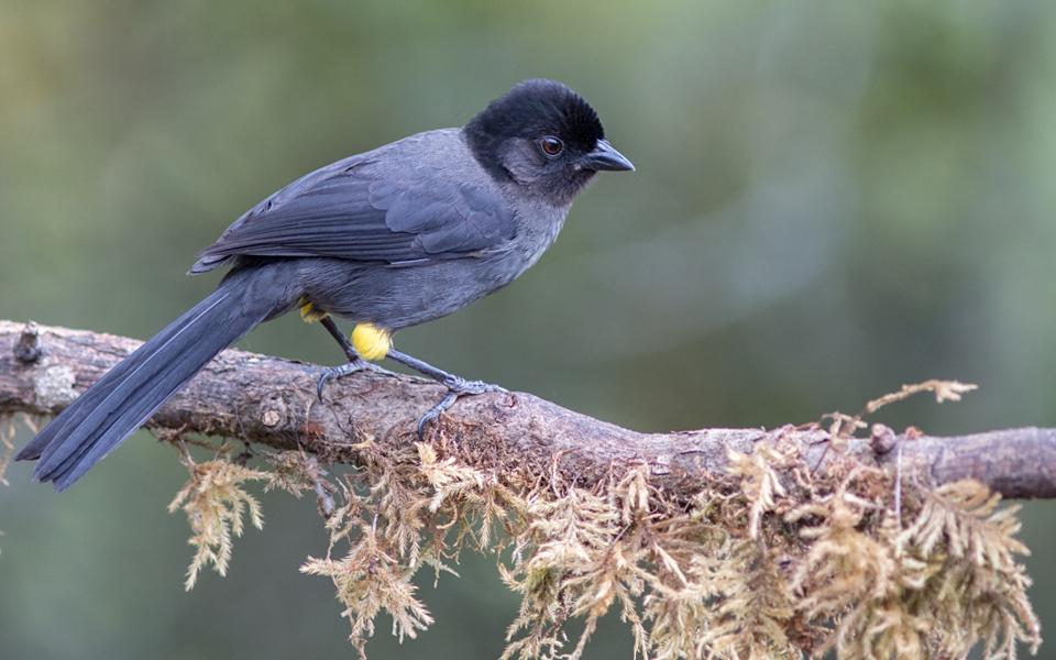Let's go birdwatching in Costa Rica…