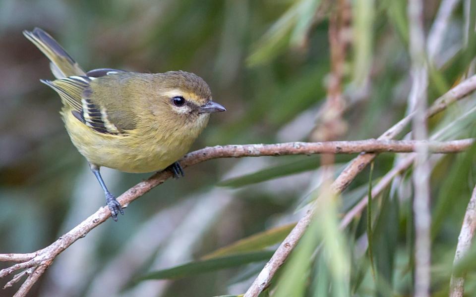 Let's go birdwatching in Costa Rica