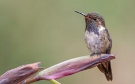 Costa Rica Bird photogallery